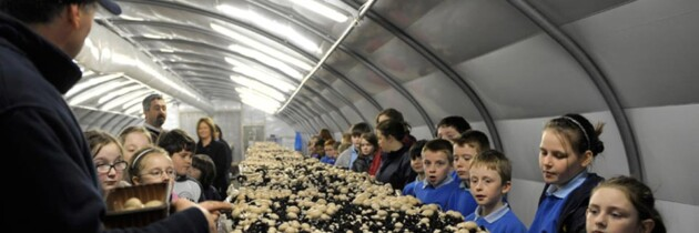 Mushroom Man Gets School Children Growing